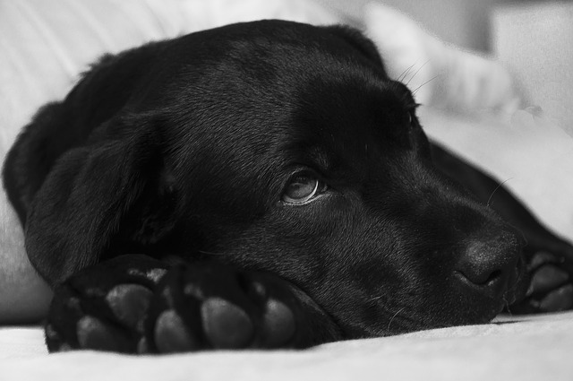 Labrador anxiety- Proven steps to handle it,Punishing your Labrador