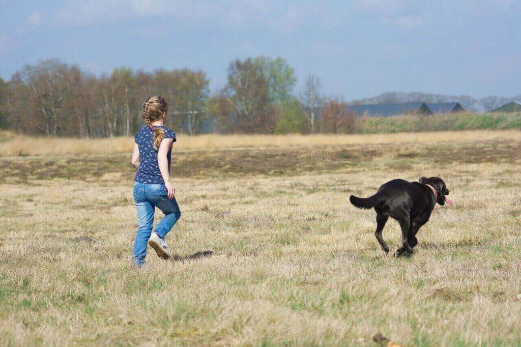 How much Exercise does a Labrador need,How much exercise does a Lab need