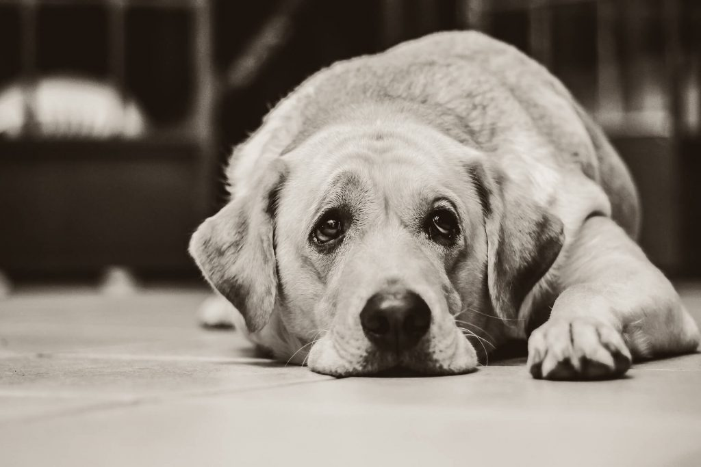 Can seizures cause Blindness in Dogs