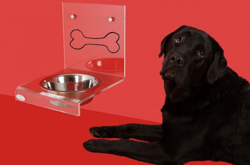 Pros and Cons of elevated Dog feeders