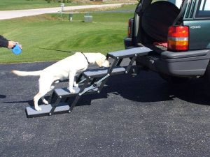 doggy ladder