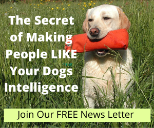The Secret of Making People Like YouR Dogs Intelligence