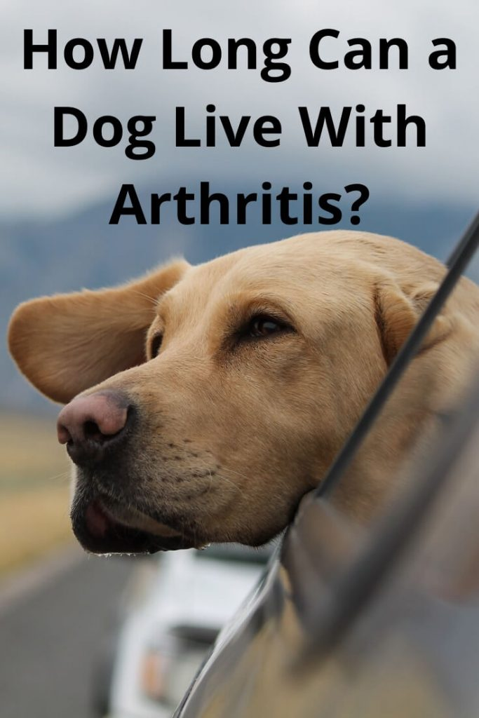 How Long Can a Dog Live With Arthritis?