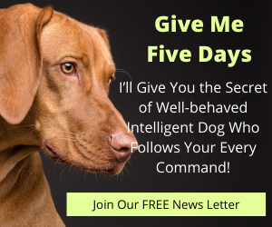 Give Me Five Days – I'll Give You the Secret of Well-behaved Intelligent Dog Who Follows Your Every Command