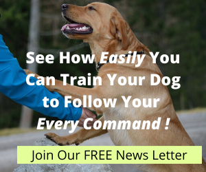 See How Easily You Can Train Your Dog to Follow Your Every Command