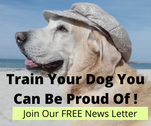 Train Your Dog You Can be Proud of