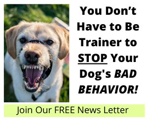 You Don't Have to Be Trainer to Stop Your Dog's Bad Behavior