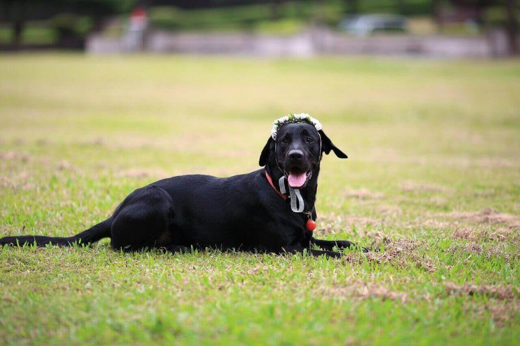 The Top 25 black Lab names