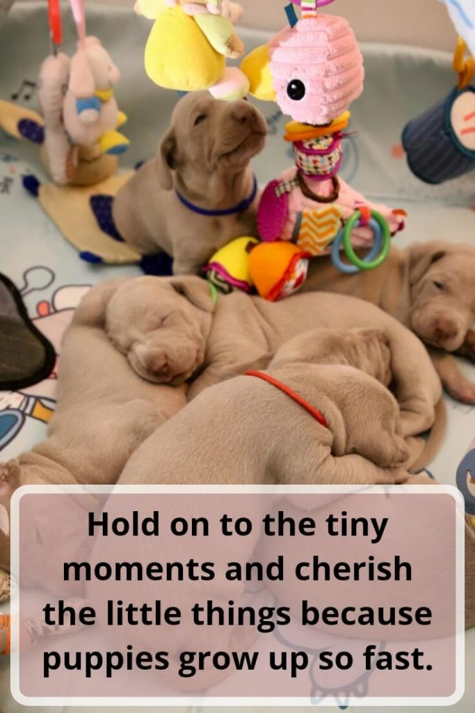 Hold on to the tiny moments and cherish the little things because puppies grow up so fast.