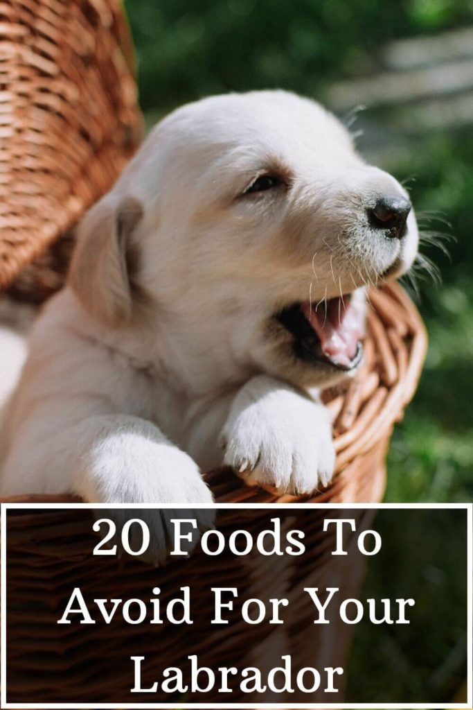 20 Foods To Avoid For Labrador