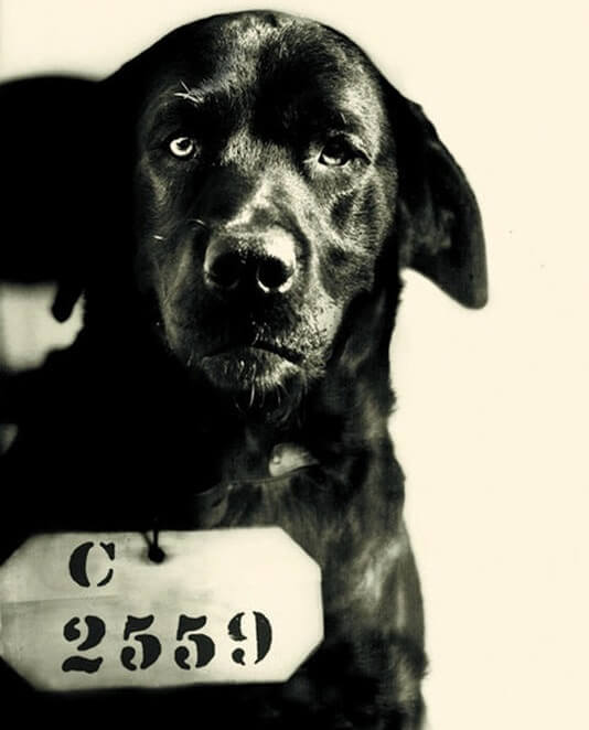 The story of a dog that went to prison